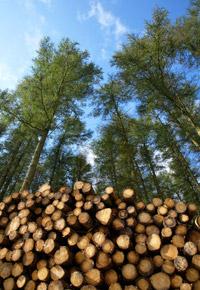 logging forest