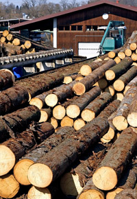 sawmill busy operations