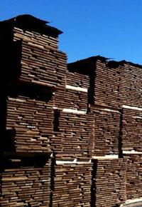Stacks of Sapele lumber