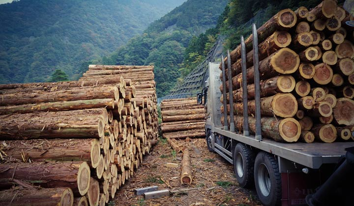 lumber truck loaded with logs for journey