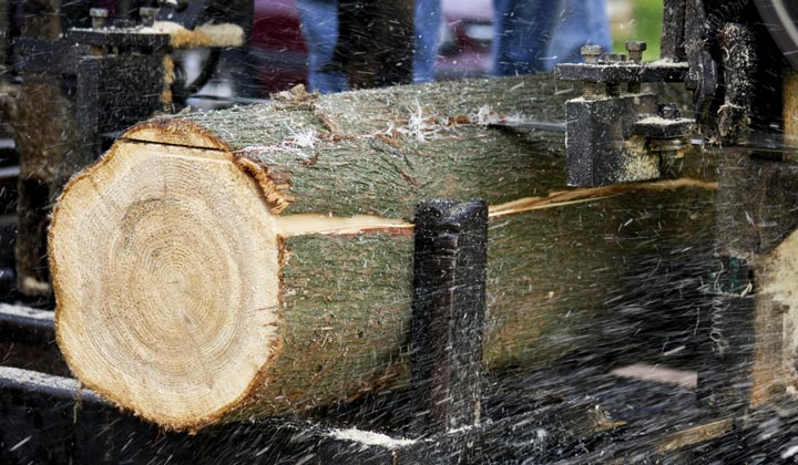 sawdust flying as log cut into boards