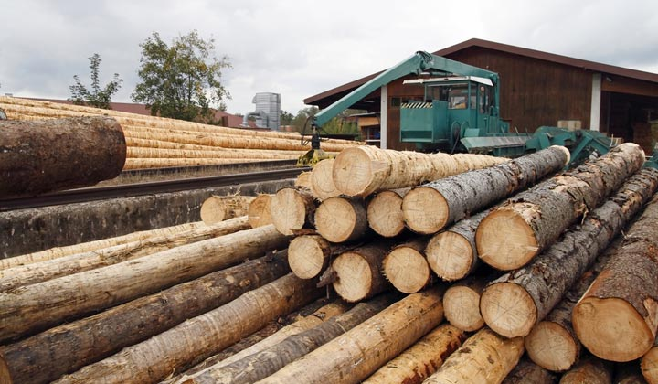 stacks of fresh tree logs at lumber mill